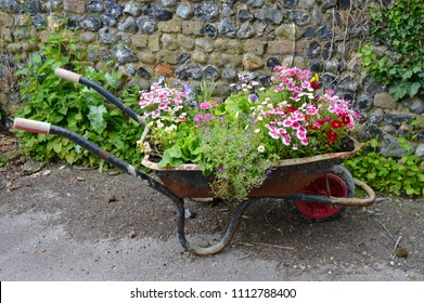 Old wheelbarrows filled with summer flowers. Traditional wheel barrows are used as clever summer planters, filled with flowers including pansies, dianthus, garden pinks and aubrieta.