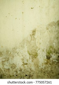 The old white concrete wall  with green algae