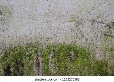 Old White stone wall with green moss texture background