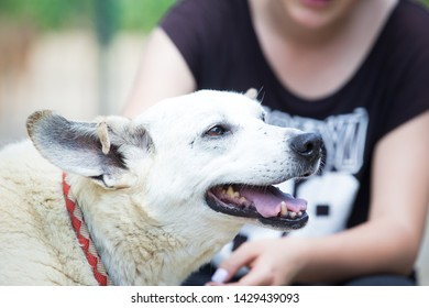 Old white stray dog adopted
