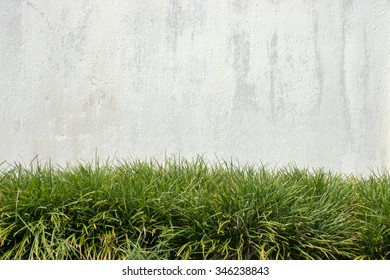 Old white wall And green grass.