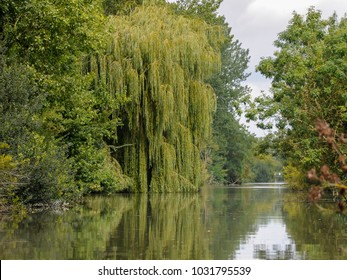 Old willow and other trees near water in Marais Poitevin Natural Regional Park, France