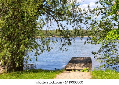 An old willow tree is standig at the lakeside of the Mueritz Lake, Mecklenburg-Vorpommern, Germany. Sunny summer morning.