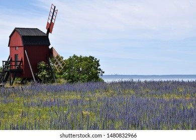 Old windmill by a field with blossom blueweed at the swedish island Oland