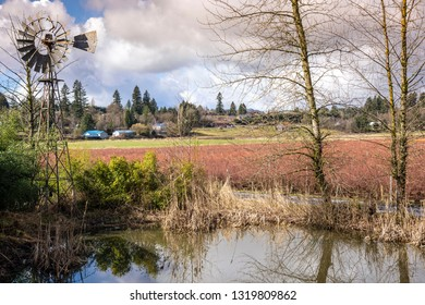 Old windmill a pond and blueberry fam landscape Washington state.