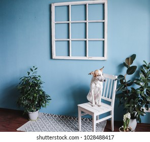 Old window frame, old chair, ficuses and dog.  shabby chic, copy space.