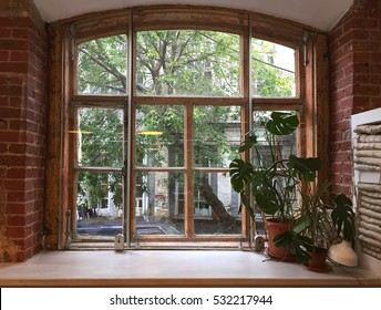 Old window with a plant