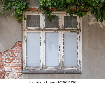 Old window, ruin with ivy facade