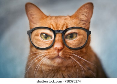 Old wise red cat like scientist with glasses, muzzle of a red cat close-up, emotion of pets, selective focus