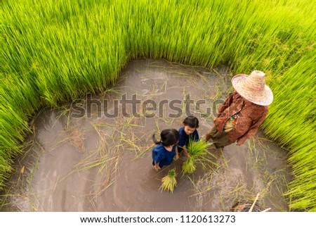 Nude asian rice girls school