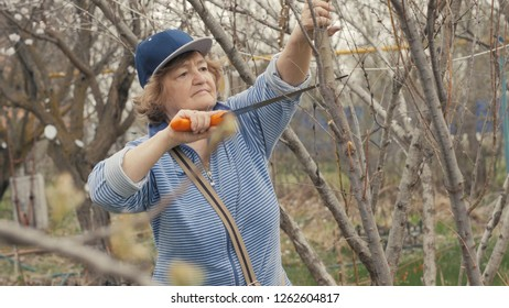 Old woman gardener using saw for sawing tree branches while gardening work
