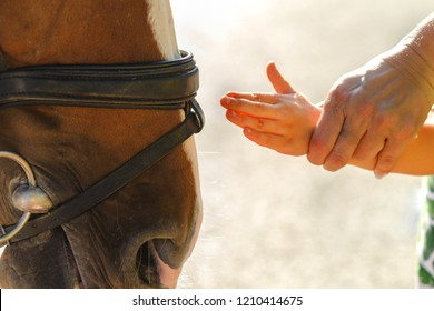 Old woman helps the girl to stroke the horse's face, close-up