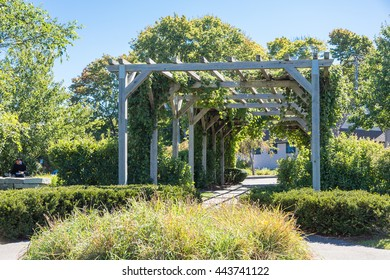 Old Wood Arbor with Grapes in a garden