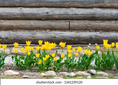 Old wood log background with cracks and lines. Flowers in foreground
