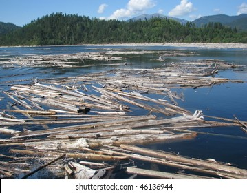 old wood on the river