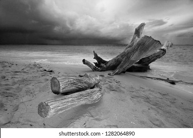 The old wood on the wild beach at Palau island, Micronesia.