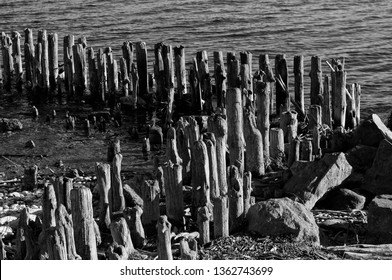 Old Wood Posts on the Beach. Old wooden Old Wood Pylons on the sea side. Old, wooden wall from pylons. Black and white photo