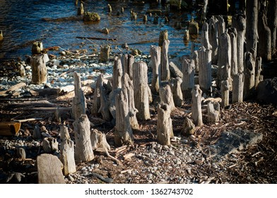 Old Wood Posts on the Beach. Old wooden Old Wood Pylons on the sea side. Old, wooden wall from pylons