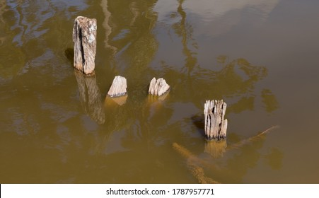 Old wood posts (probably a rural fence) rotting submerged into a artificial lake. Partially submerged in brown cloudy water.