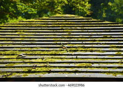 Old wood roof with moss