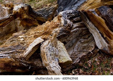 Old wood stump of an old tree.