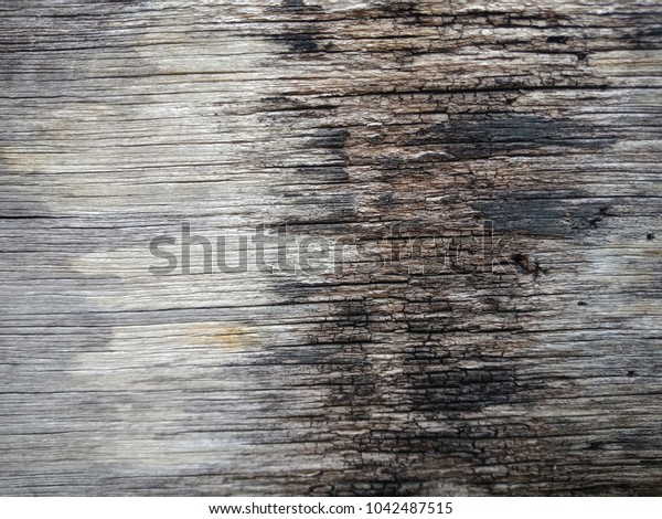 Old wood texture /background.