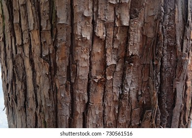 Old Wood Texture in ole tree