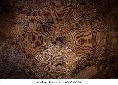 Old wood trunk cut