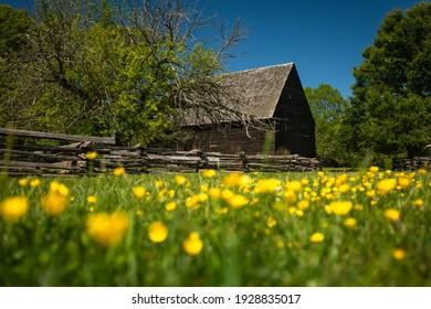 Alte Holzhütte am Piscataway Park National Colonial Farm mit gelben Blumen in Foreground an einem sonnigen Sommertag - kein Volk