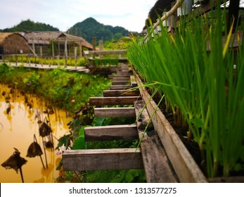The old wooden beams which extended from the bridge that was built to cross the lotus pond. Along the pathway, with spring onions and mint trees to decorate. Selective focus and copy space.