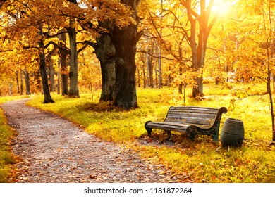 Old wooden bench in the autumn park under colorful autumn trees with golden leaves