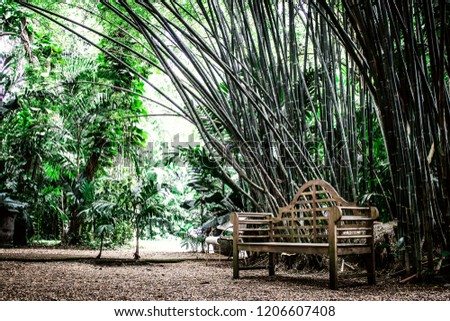 Old Wooden Bench Seat Midst Bamboo Stock Photo Edit Now 1206607408
