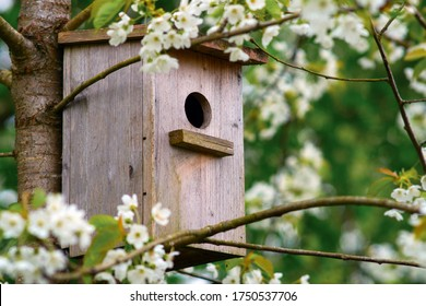 Altes Holzhaus auf einem Kirschbaum in der Parkzone. Einfaches Vogelhaus-Design. Schutz für die Vogelzucht, Nistkasten auf dem Baum