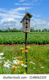 Old wooden birdhouse and a potato field in the background.