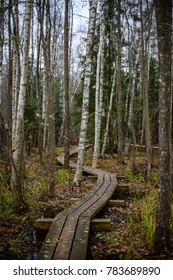 old wooden boardwalk covered with leaves in ancient forest with mossy tree trunks