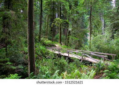 Old Wooden Bridge above Creek in Redwood Forest - Jedediah Smith Redwoods State Park, California, USA