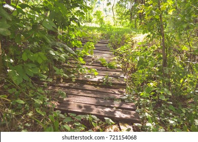 Old wooden bridge in deep forest, natural vintage background. Bridge overgrown with green plants. Magic path