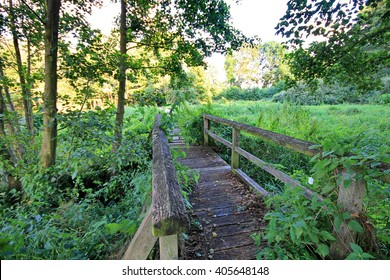 Old wooden bridge in forest on a summer day