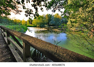 Old wooden bridge on the pond in forest on a summer day