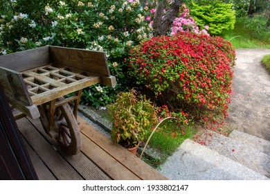 old wooden cart brought from japan (?)  and blossoming azalea bushes  in japanese garden in Europe (Potsdam next to Berlin )