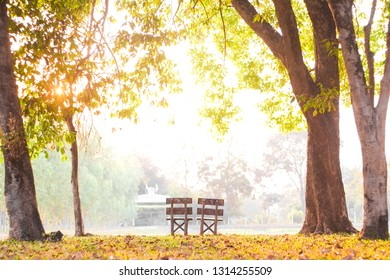 Old wooden chairs paired in under the trees in the park with the golden yellow light in the evening.