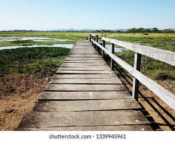 Old wooden deck leading towards a marsh like pond