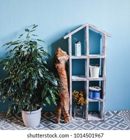 Old wooden dollhouse, Ginger cat and ficus