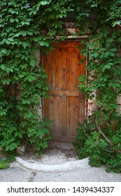 old wooden door covered with ivy