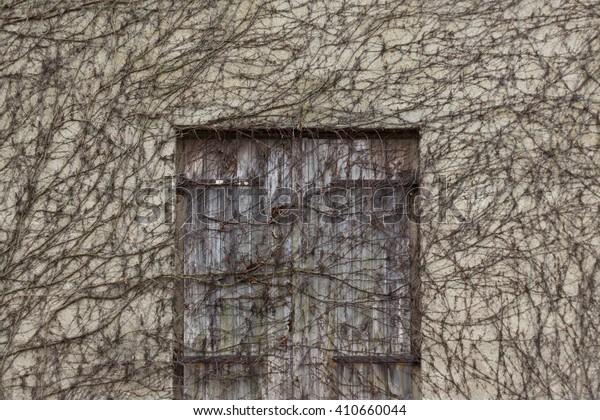 old wooden door overgrown by ivy plants