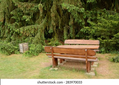 Old wooden dustbin and bench standing at pines in park.