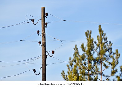 Old wooden electric pole with three phases and pine tree