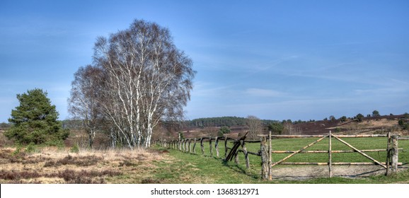 Old wooden fence with gate in a beautiful typical heath landscape in the nature reserve Luneburg heath in spring. A heath panorama.
