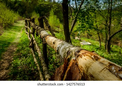 Old wooden fence in the green forest