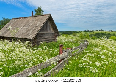 An old wooden house in a field overgrown with flowers North-West of Russia.
